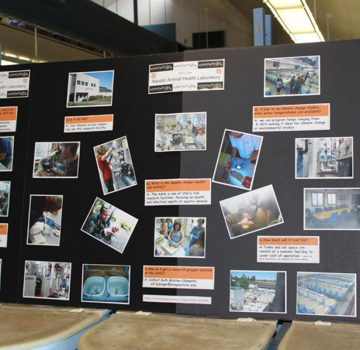 poster board with photos and facts about salmon disease lab