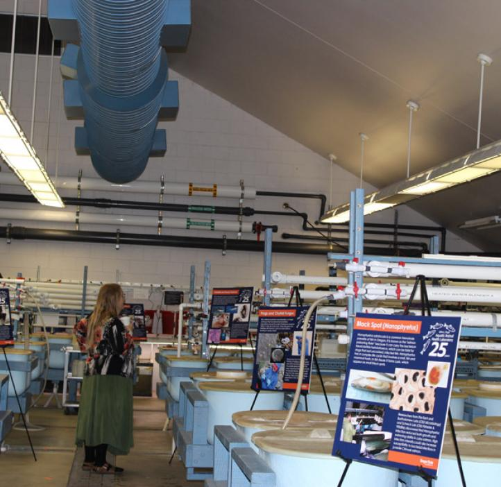 salmon disease lab equipment and posters