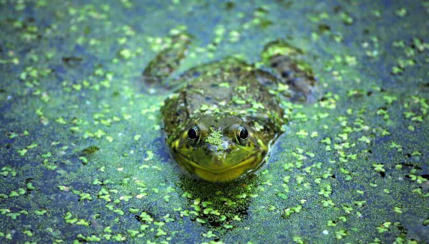 frog sitting in creek