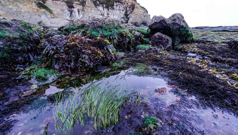 tide pools along Oregon coast