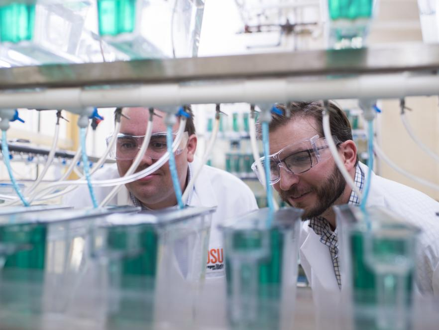 Thomas Sharpton with colleague looking at samples in lab